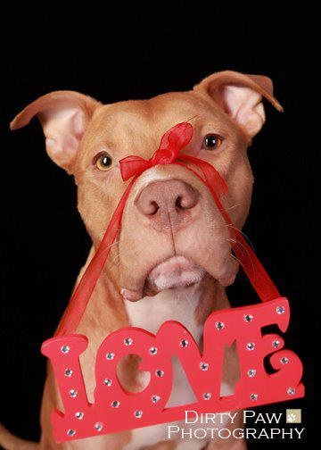 44 Best Valentine S Day Dogs Images On Pinterest