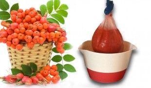 Jarabina - liečivé rastliny