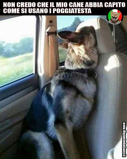 Cane e poggiatesta http://www.vignetteitaliane.it #vignette #immagini #divertenti #italiano #lol #funny #pictures #italian #cani #dogs