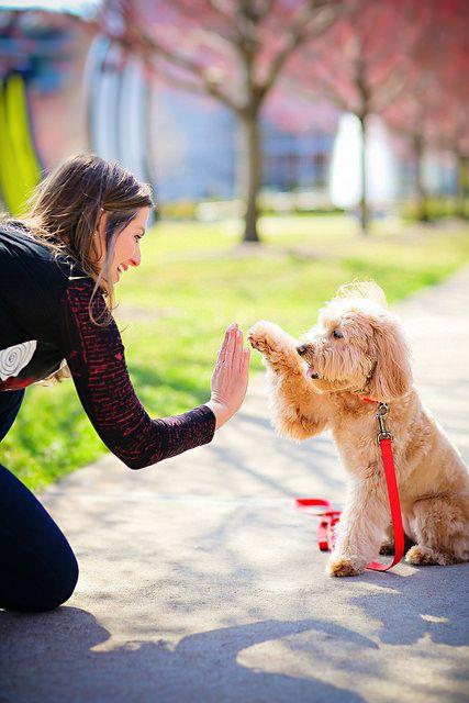 Goldendoodle Puppies, Miniature Goldendoodles, Goldendoodle Breeders, Mini Goldendoodle Puppies, Goldendoodles For Sale