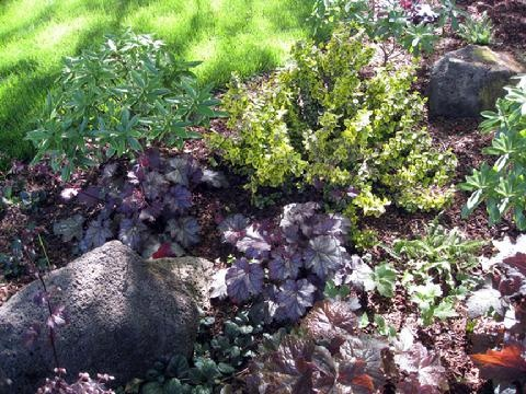 The foliage colors of Heuchers, Daphne, Euonymus 'Emerald & Gold', and Ajuga contrast beautifully with each other for year-round color in the shade.