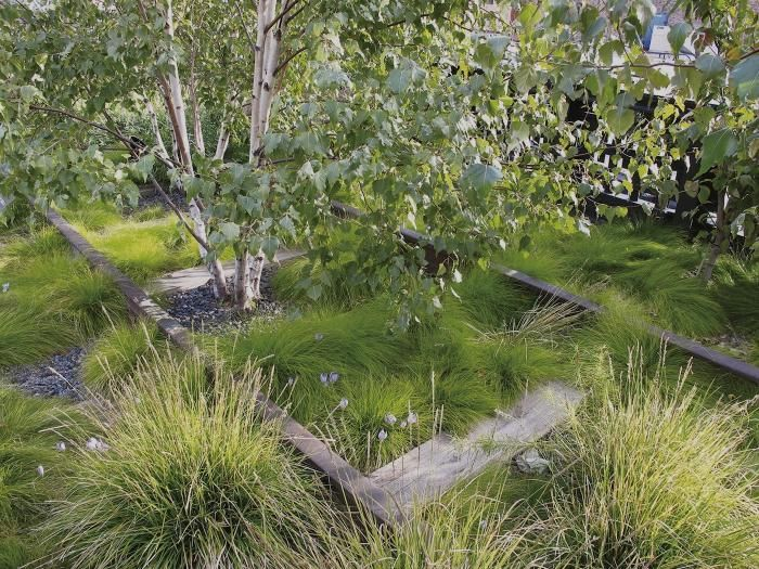 2615 best Grass Gardens images on Pinterest Ornamental grasses