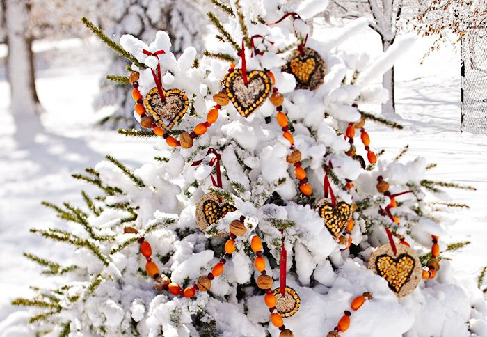 Bird seed ornaments hanging on outdoor tree