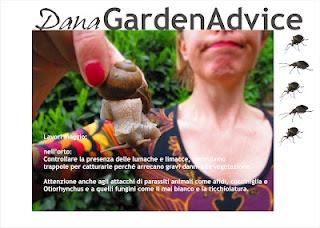 Dana Garden Advice