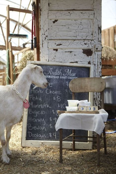 Totally getting a goat for the new place.  I guess I need to start scouting out farm-sitters.