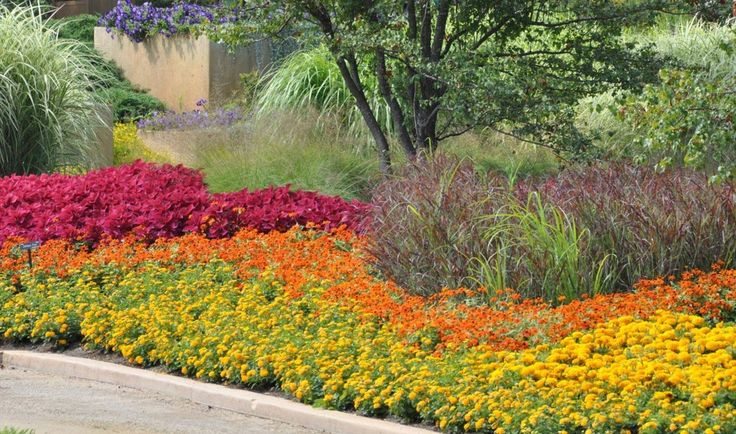 1000 images about garden ideas on pinterest backyards for Annual garden designs