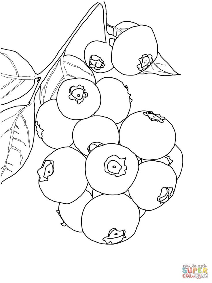 cranberry coloring pages kids - photo#16