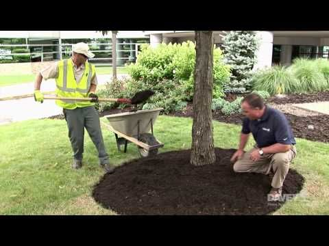 How to Properly Mulch Around a Tree | This Old House - YouTube