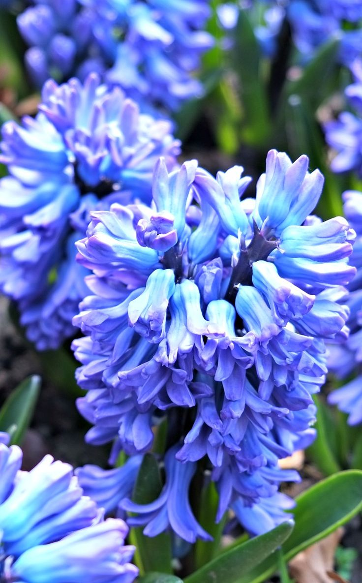 868 best flowers images on pinterest flowers garden flowers and
