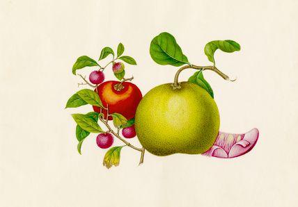 Wang Lui Chi -- Citrus maxima, Diospyros kaki, Litchi chinensis -- Fruit, Vegetables and Herbs -- RHS Prints