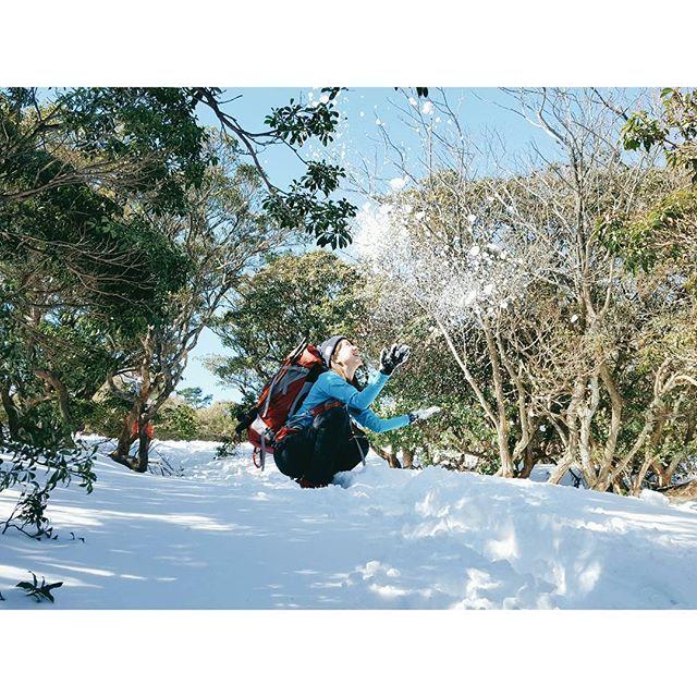 【yumi_hutte】さんのInstagramをピンしています。 《* 上の方はサラサラのパウダーだった❄ ・ ・ ・ #ユミユルハイ #アセビ #馬酔木 #馬酔木のトンネル  #入道ヶ岳 #鈴鹿 #登山 #山歩き #ハイキング #雪山登山 #雪山 #アウトドア #hike #冬 #三重県 #森 #山 #雪景色》