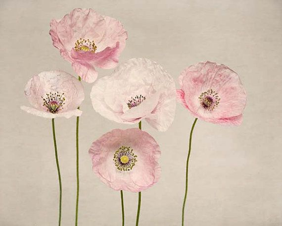 TITLE : Poppies No. 3  SIZE : 5x7, 8x10 or 11x14 (choose in drop-down menu)    Fine art photograph professionally printed on premium archival