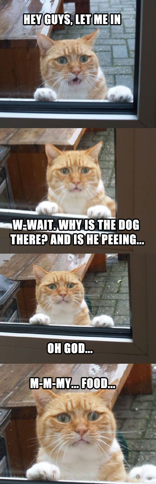 outside cat: