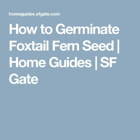 How to Germinate Foxtail Fern Seed | Home Guides | SF Gate