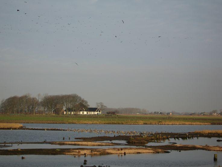 Wie gek is op vogels moet zeker een bezoek brengen aan de Ottersaat bij  Oosterend.
