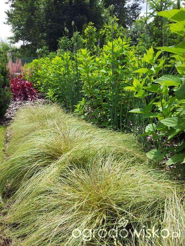 Moja codzienność - ogród Oli - strona 826 - Forum ogrodnicze - Ogrodowisko