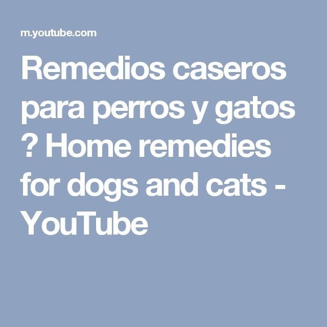 Remedios caseros para perros y gatos ♥ Home remedies for dogs and cats - YouTube