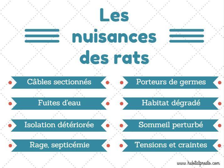 Quelles peuvent être les nuisances causées par les rongeurs ? | http://www.habitatpresto.com/jardin-exterieur/desinfestation-deratisation/19-nuisances-rongeurs #deratisation #rongeur