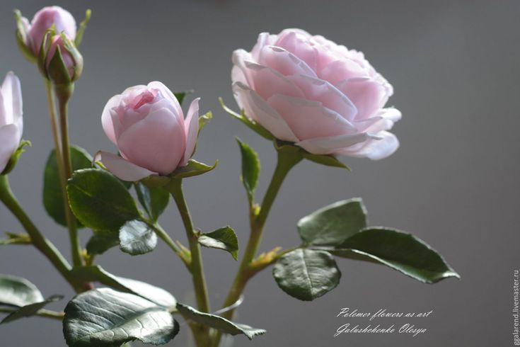 Buy English rose varieties Scepter'd'isle.Polymer clay. - pale pink, pink, roses