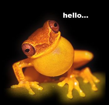 cute frog photos | ... Funny Cute Pics of Animals: Cute Face of Funny Frog Picture - Hello