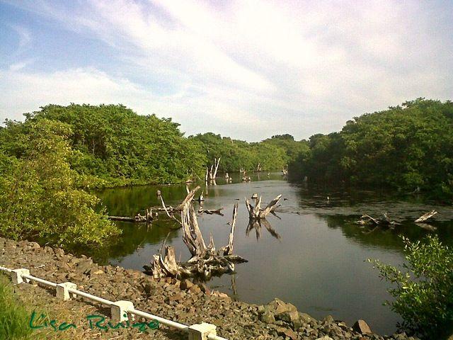 Punta Chame - Panama