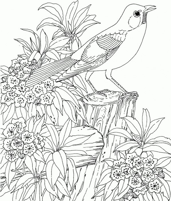 Printable Robin In Garden Coloring Pages
