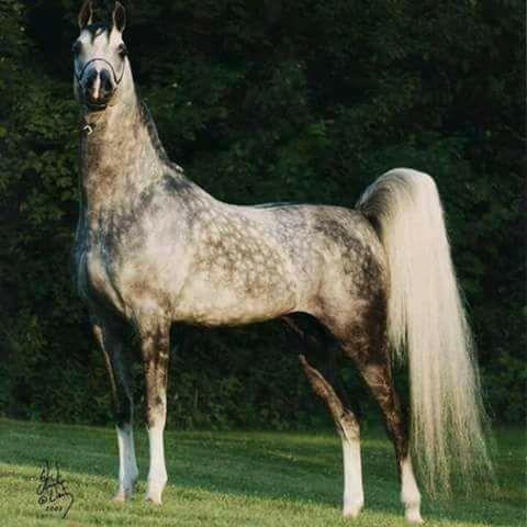 Gorgeous Dapple Grey