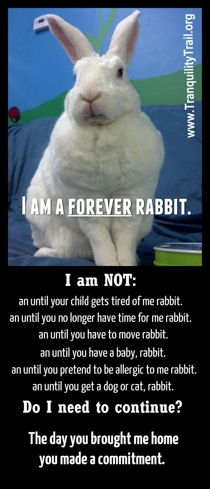 A Pet Is For Forever Don't Make Excuses #beresponsible #houserabbit 150  Rescue