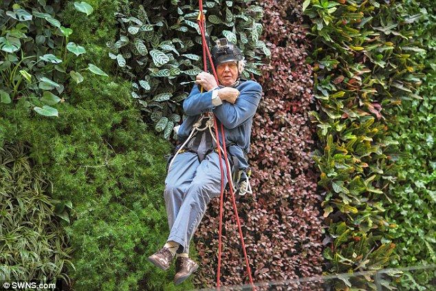 This 89 year old naturalist scaled a 50ft #livingwall to launch a new conservation centre. http://www.dailymail.co.uk/sciencetech/article-3526222/Sir-David-Attenborough-scales-new-heights-89-year-old-naturalist-abseils-50ft-living-wall-launch-new-conservation-centre.html