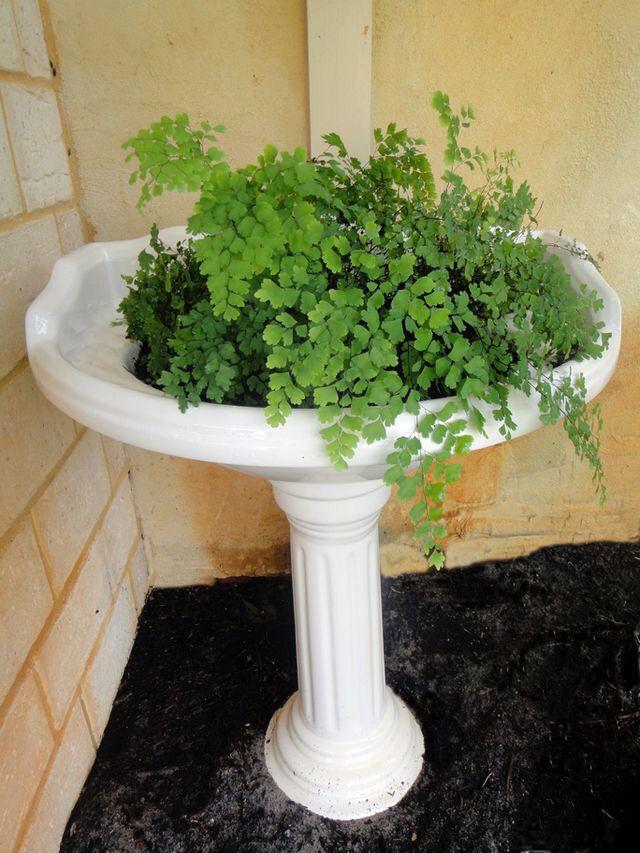 Old bathroom basin Made into a planter
