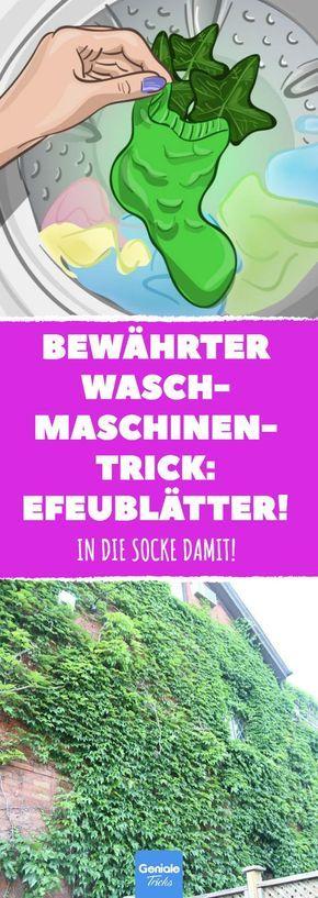 Bewährter Waschmaschinentrick: Efeublätter! #waschen #waschmaschine #waschmitt… – Karin P.