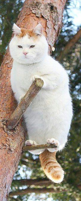 I´M NOT A CAT -- I´M A BIRD #Gepinnt von: Michele https://www.pinterest.com/pin/412572015848620384/