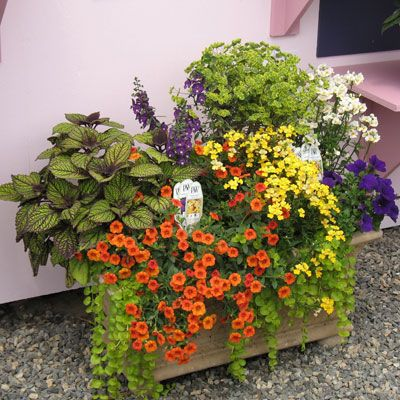 Annuals For Patio Deck Pots In Full Sun  Http://forums2.gardenweb