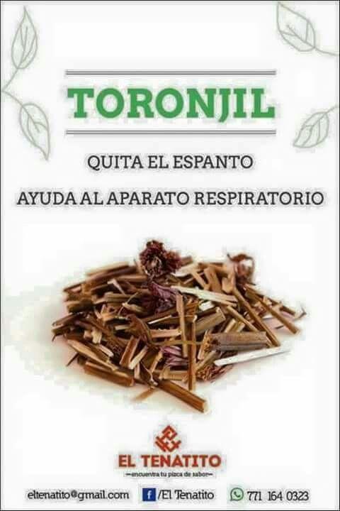 Toronjil