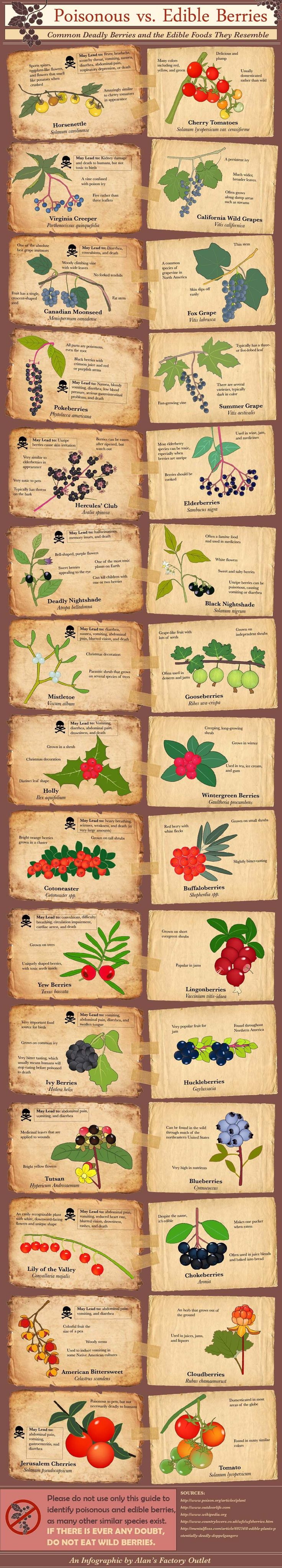 Poisonous vs Edible Berries - Deadly Berries & the Edible Foods They Resemble