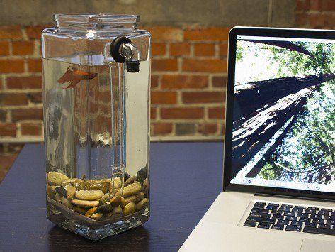 NoClean Aquarium Glass Fish Tanks