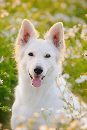 Dog Care 101 Tip #178 – Natural Dog Care: Herbal Remedies | Best Bully Sticks Healthy Dog Blog