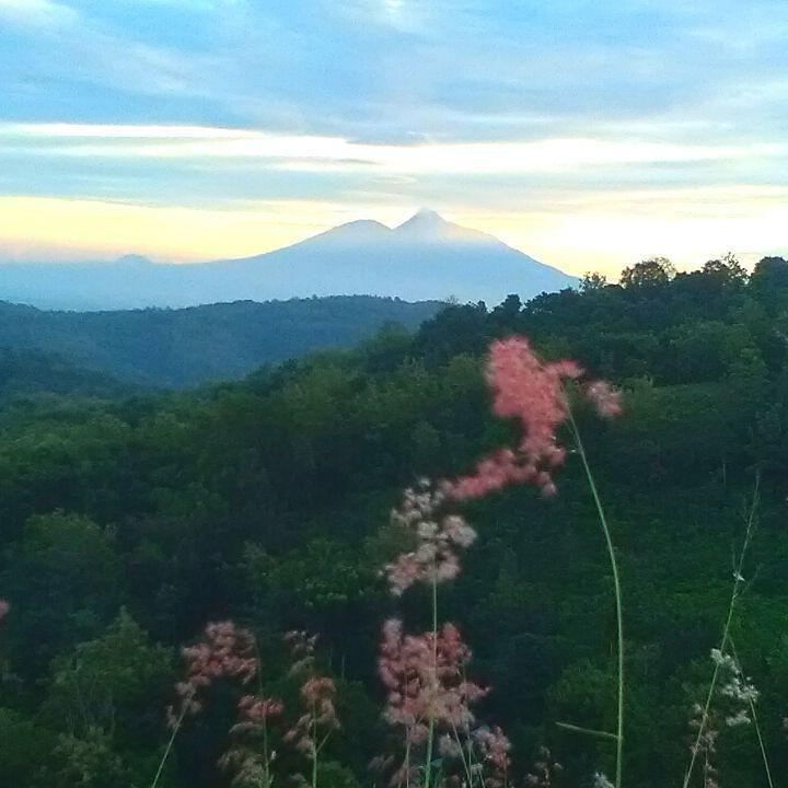 Selamat pagi merapi merbabu . . Taken at bukit bego imogiri bantul yogyakarta  #morning #fresh #mountain #mountains #hill #forest #tree #weeds #nature #sky #natural #view #loveit #myphoto #adventure #jogjaku #jogja #visityogya #detailjogja #dolanjogja #dolanbantul #jelajahbantul #explorebantul #wonderfuljogja #yogyakartacity by Jelajah Bantul