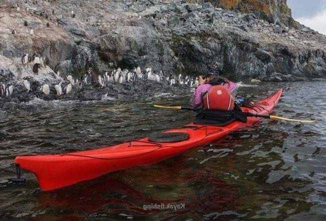 Kayaking With Penguins Kayaking With Penguins Simon S Town Kayak With Penguins Waterfront Kayaking Sea Kayaking Kayak In 2020 Kayaking Near Me Kayaking Kayak Fishing