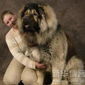 this is a tibetan mastiff..............................