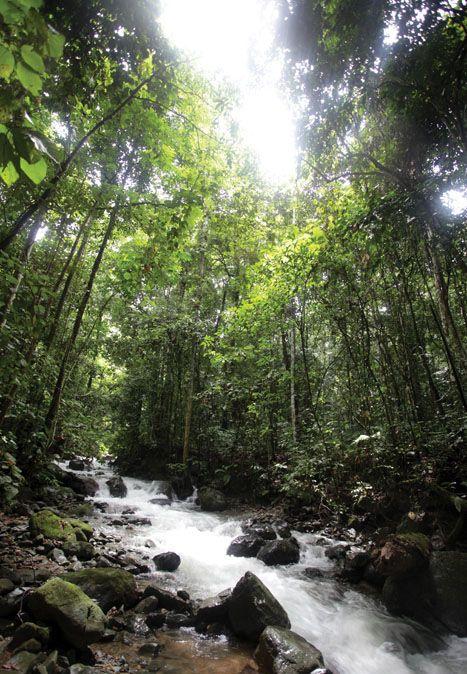 East Borneo, Indonesia.