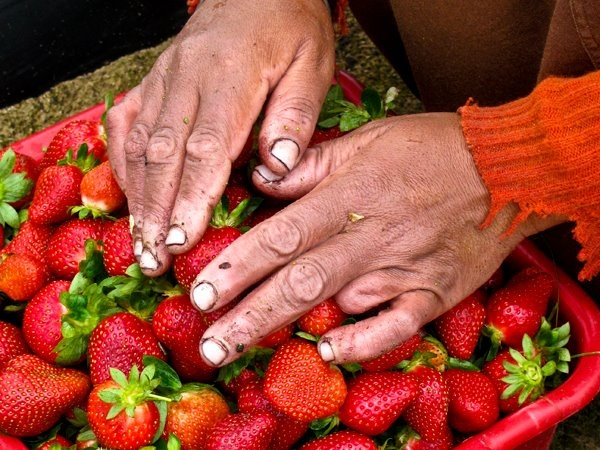 How a strawberry picker won Naomi Myburgh a Canon EOS 5D Mark II in 2011    And here's how you can win a Canon EOS 500D with LivDigital Independent News