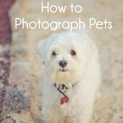 How to Photograph Pets - blog.picaboo.com