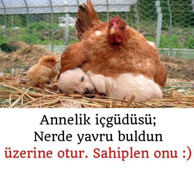 #annelik içgüdüsü.. :)