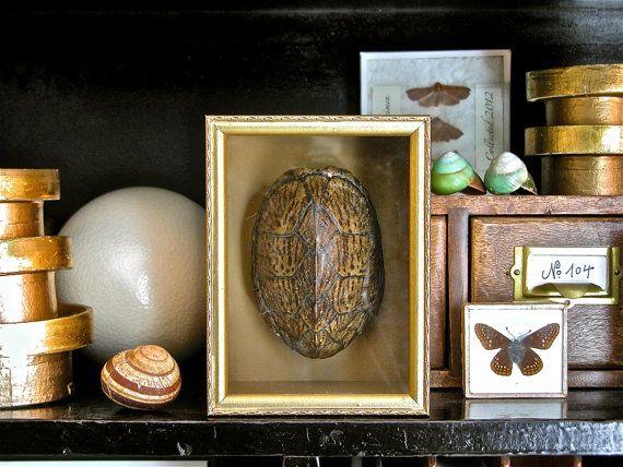 Relatively 80 best Turtle Shell images on Pinterest | Turtle shells, Tortoise  QH41