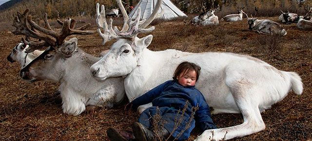 The Life Of Mongolian Reindeer People Captured In Stunning Photographs | DeMilked