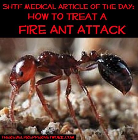 fire ants essay Fall 2013 essays on invertebrate conservation  to disease,  severe storms, or fire or been removed  of the region's ant species and should.