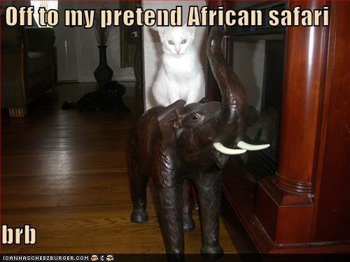 safari cat