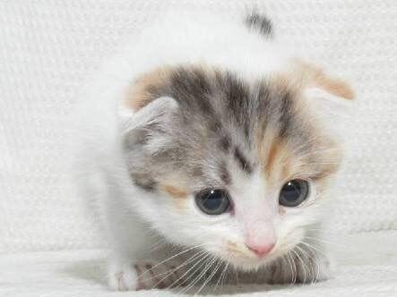 猫とか犬とかの画像が集まるスレ:ハムスター速報