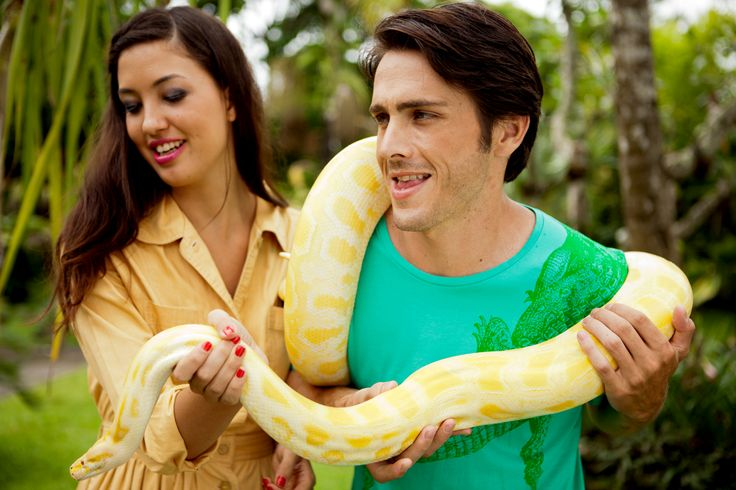 Animal encounter with The Burmese python at Bali Zoo
